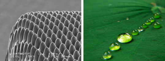 Fabrication of super hydrophobic surfaces - Fujifilm